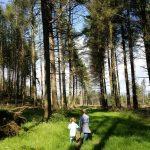 #LivingArrows - Our Woodland Walk