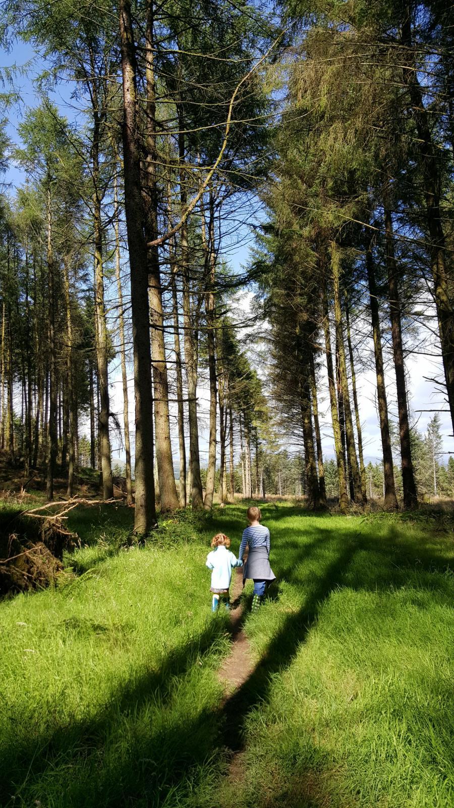 #LivingArrows – Our Woodland Walk