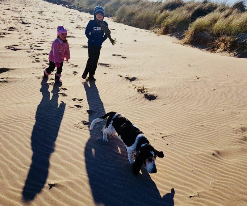 #LivingArrows - Basset on the Beach 9/53 (2018)