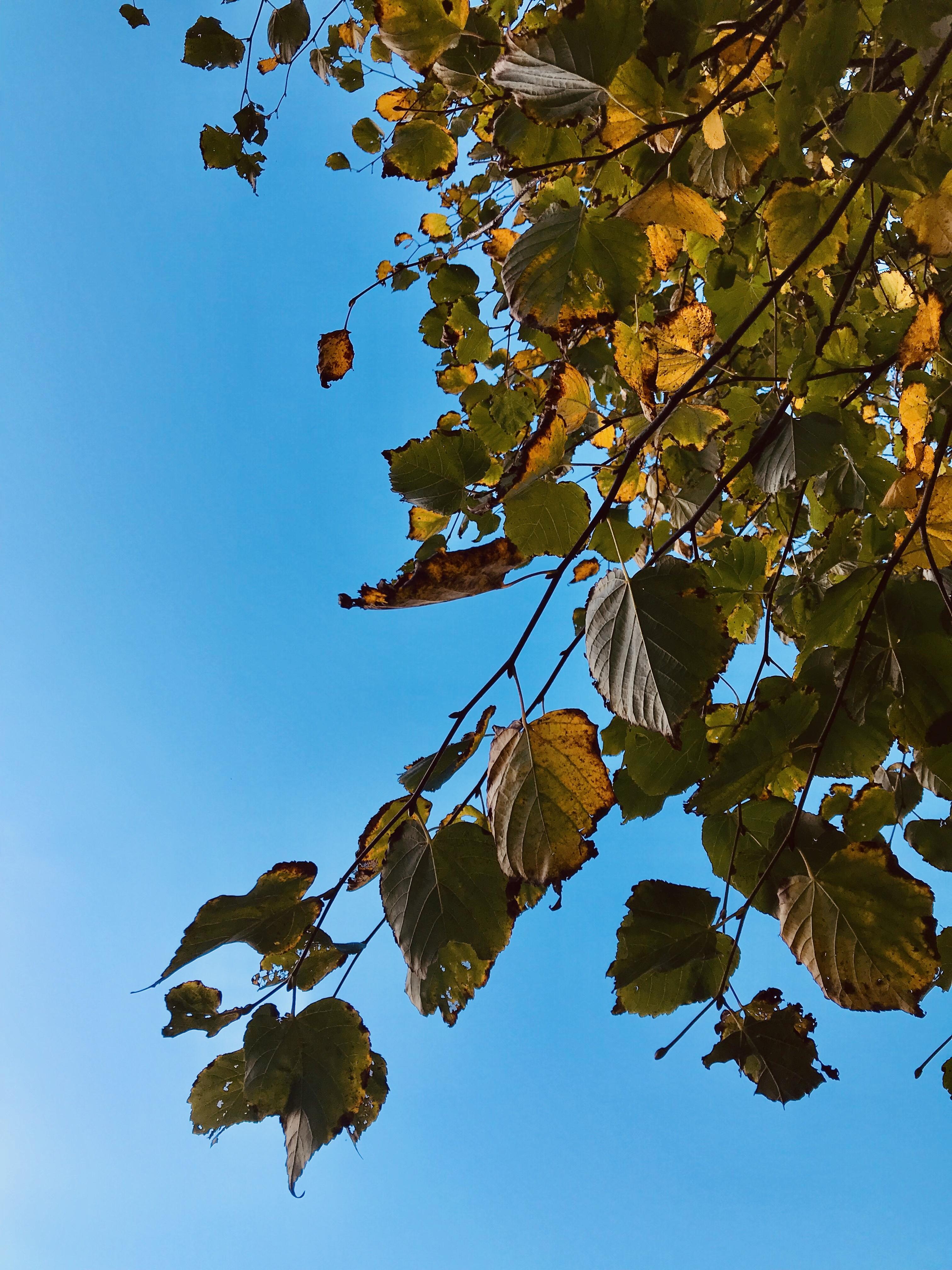 #MySundayPhoto - Autumn Song