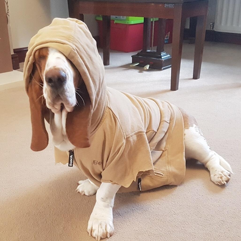 #TheOrdinaryMoments - Snoop Dog