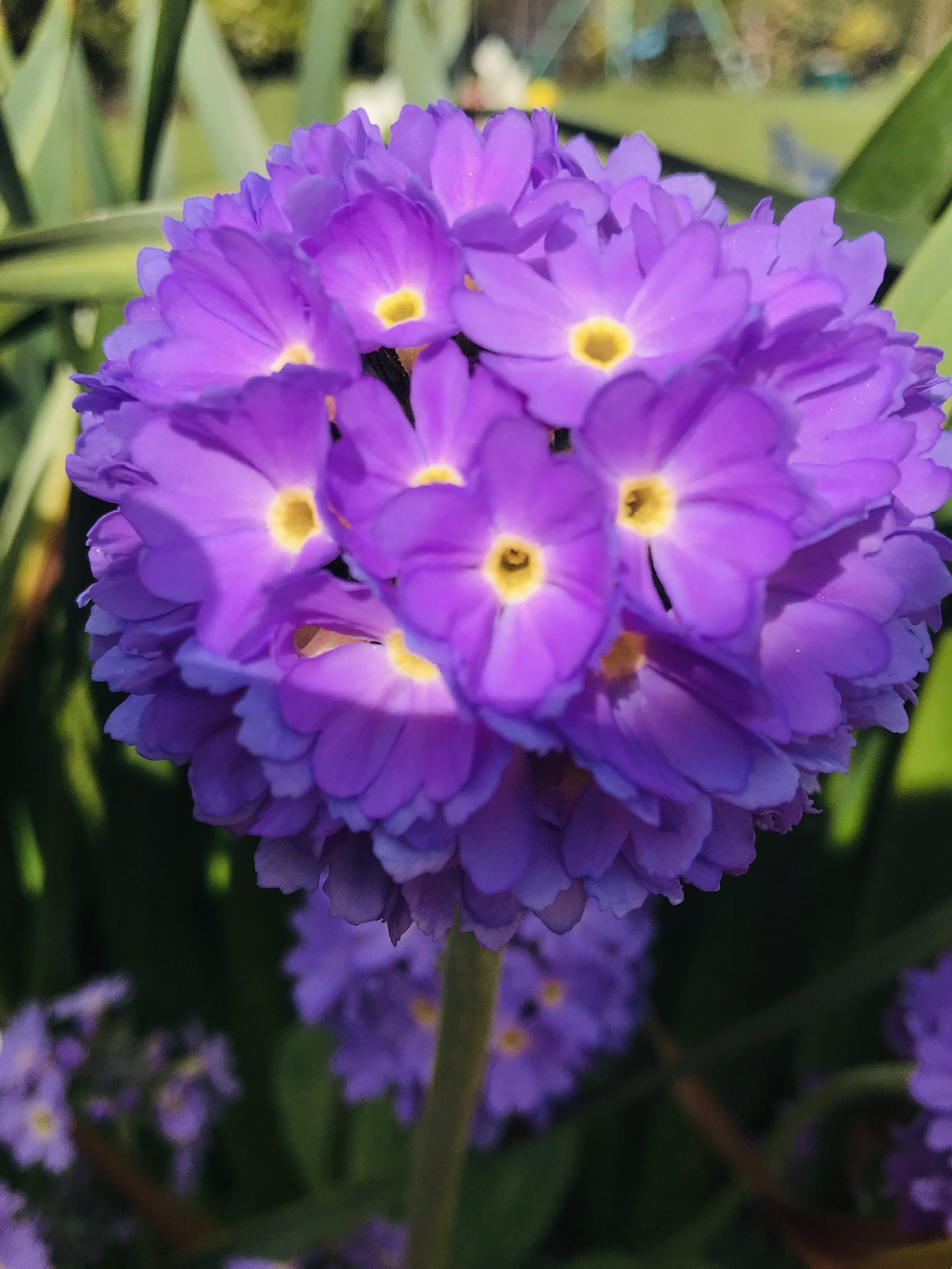 #MySundaySnapshot – Spring Is In Bloom 14/52 (2019)