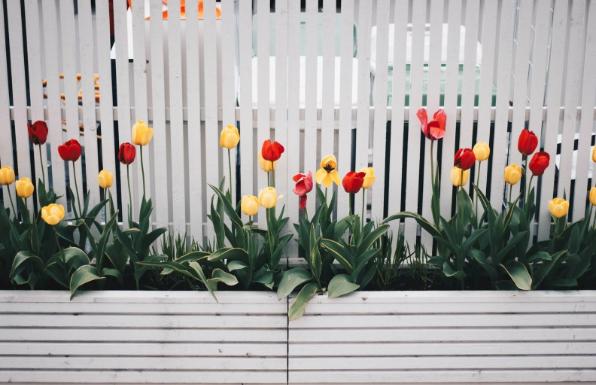 Ideas for a Great Family Garden