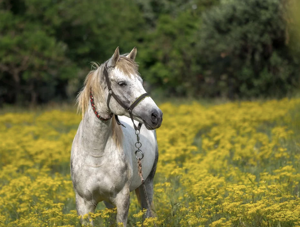 What To Ask Before You Buy A Horse