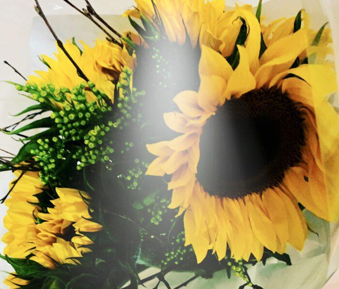 #MySundaySnapshot - Sunflower Power 33/52 (2020)
