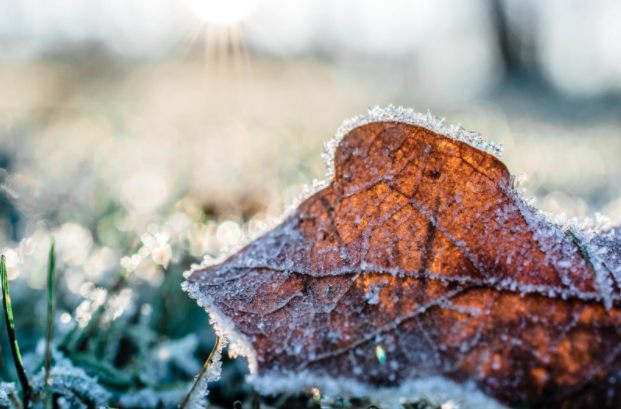 Taking Care of Your Garden Through the Winter