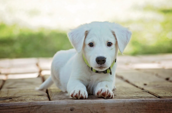 How to Prepare For a New Dog