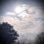 #MySundaySnapshot - Hello Sunshine 10/52 (2021)