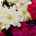#MySundaySnapshot - Blooming Bright 13/52 (2021)