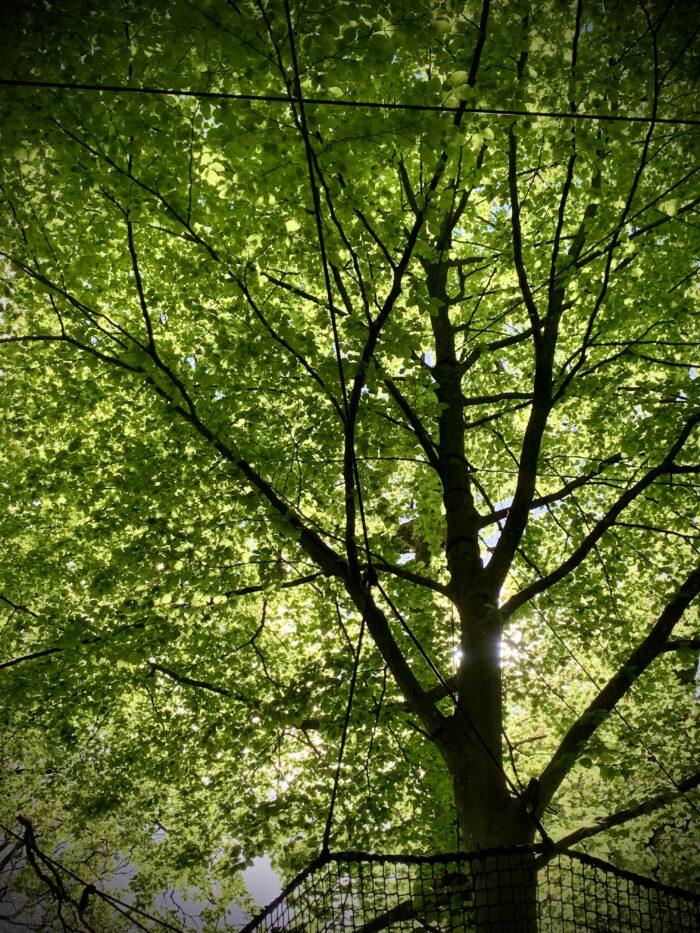 #MySundaySnapshot - TreeTop Terrific 21/52 (2021)