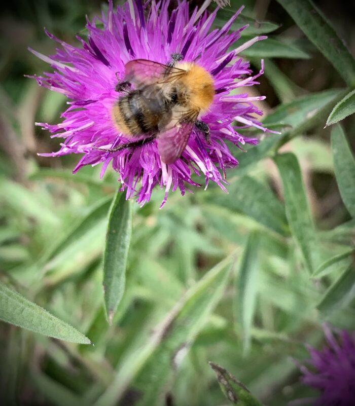 #MySundaySnapshot - Bee Happy 34/52 (2021)
